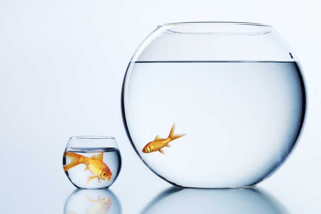 uncomfortable-goldfish